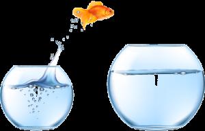 OS Changer goldfish jumping